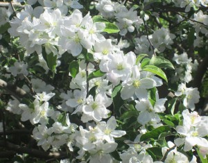 spring flowers  (51)