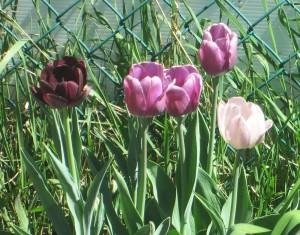 spring flowers  (52)