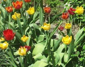 spring flowers  (54)