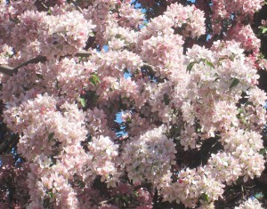 spring flowers  (55)