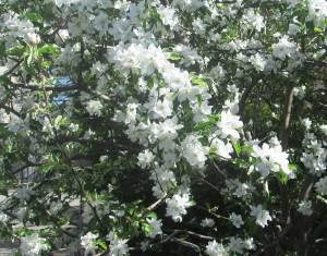 spring flowers  (56)