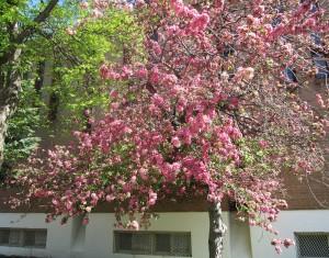 spring flowers  (57)