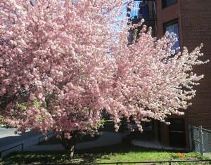 spring flowers  (58)