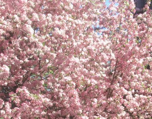 spring flowers  (59)