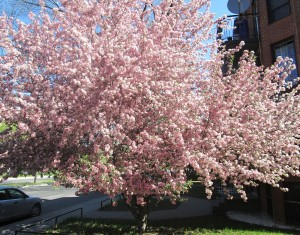 spring flowers  (60)