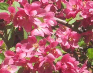spring flowers  (61)