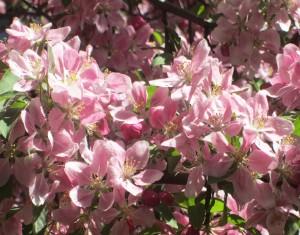 spring flowers  (62)
