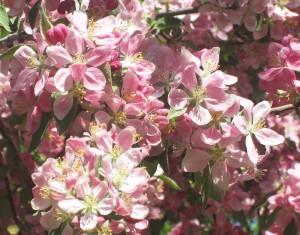 spring flowers  (63)