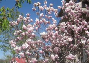 spring flowers  (64)