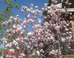 spring flowers  (65)