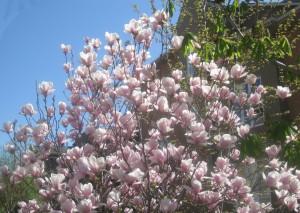 spring flowers  (66)