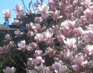 spring flowers  (67)