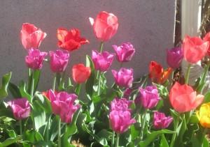 spring flowers  (68)