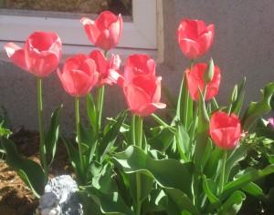spring flowers  (69)
