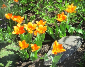 spring flowers  (7)