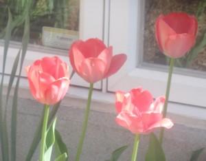 spring flowers  (71)