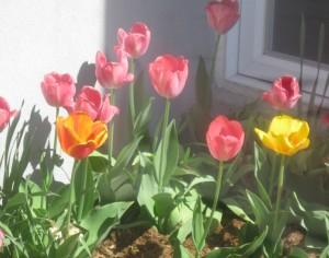 spring flowers  (72)