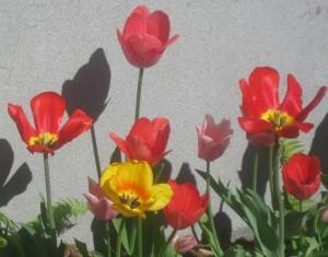 spring flowers  (73)