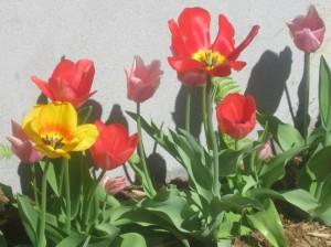 spring flowers  (74)