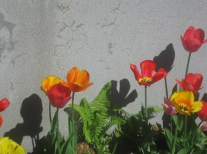 spring flowers  (75)