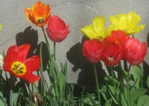 spring flowers  (76)
