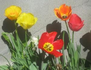 spring flowers  (77)