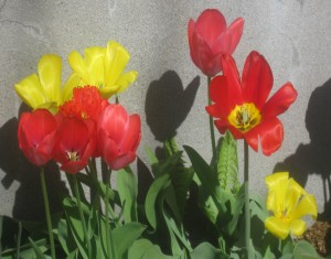 spring flowers  (78)