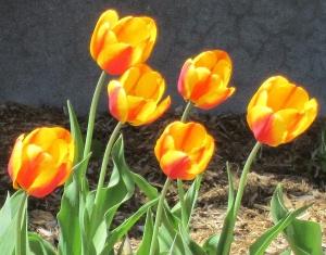 spring flowers  (8)