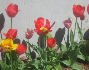 spring flowers  (80)