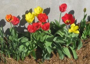 spring flowers  (82)