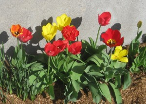 spring flowers  (84)