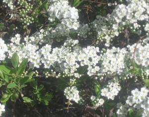 spring flowers  (86)