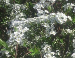 spring flowers  (87)