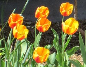spring flowers  (9)