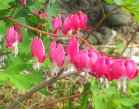 spring 2015 (6)
