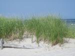 beach (38)