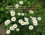 versed  flowers (1)